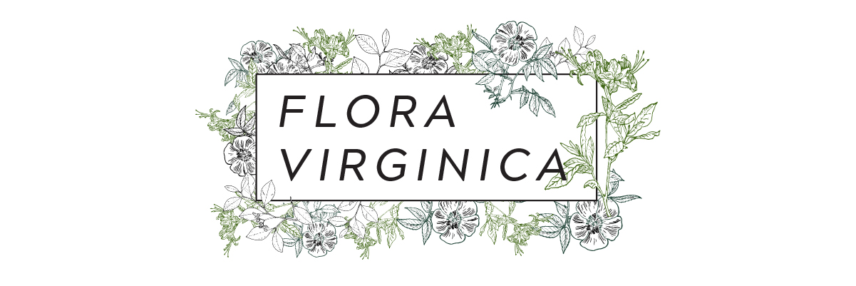 "Floral banner with ""Flora Virginica"" written on it"